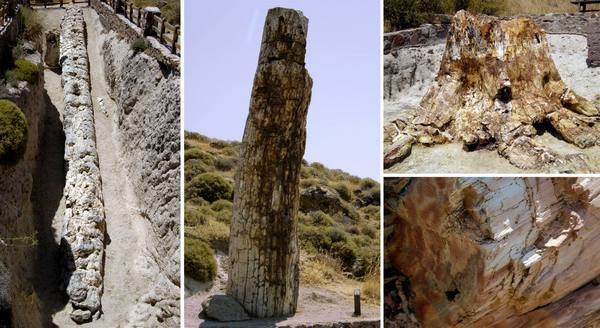 Photo Source: Lesvos Petrified Forest