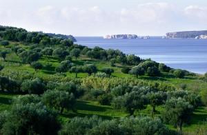 View from Navarino Bay.