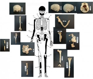 The remains of a woman over 60 years old were discovered.