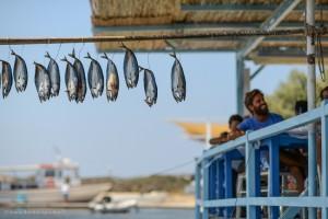 Fresh fish at Agios Georgios, Antiparos. Photo © Maria Theofanopoulou