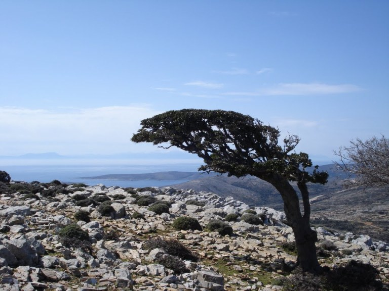 Kochilas mountain, Skyros - Natura 2000. Photo source: inskyros.gr
