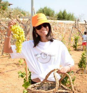 Creta_Maris_Harvest 1