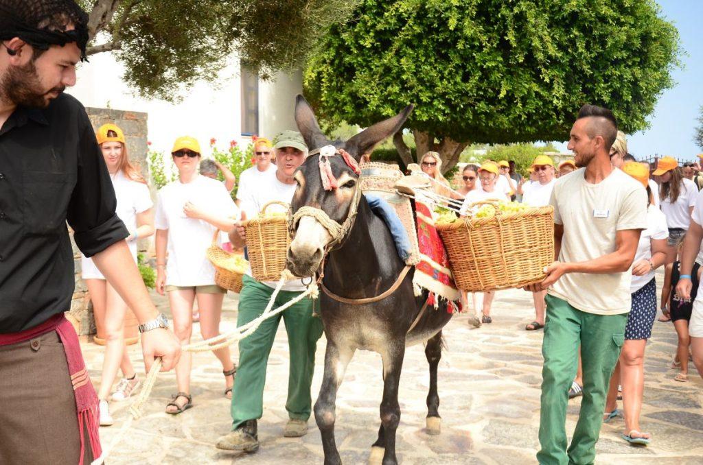 Creta_Maris_Harvest 2