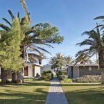 Creta Beach Hotel & Bungalows Palm Trees