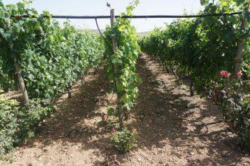 The Lyrarakis Winery.