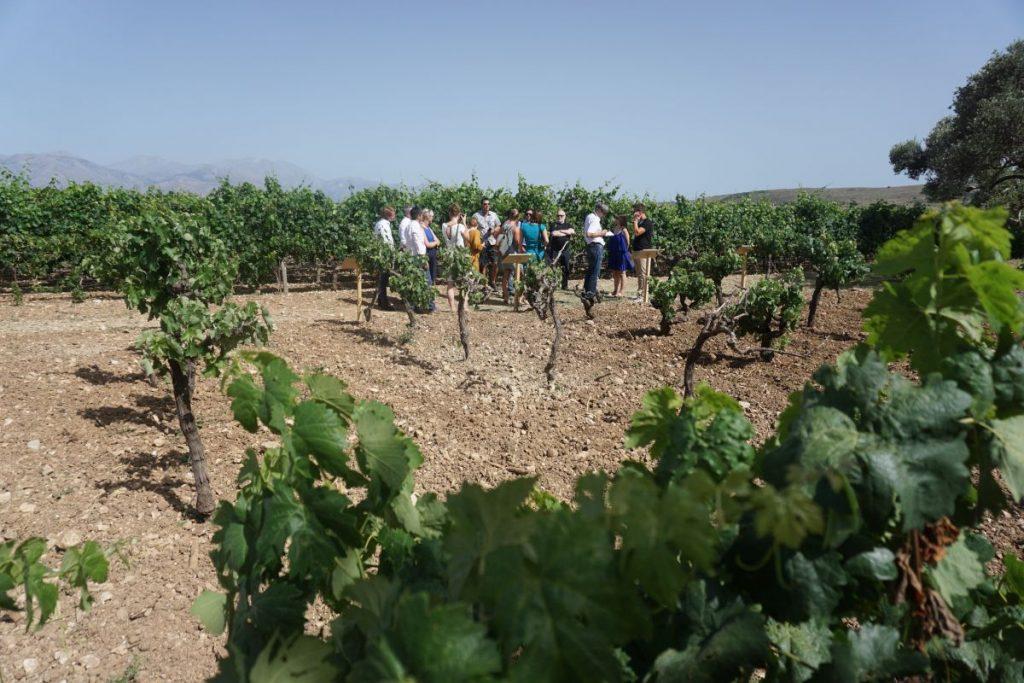Vineyard tour on Crete.