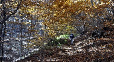 Lehovo Hiking Trail Network
