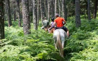 Pertouli Horse Riding