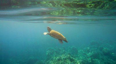 Photo Source: @National Marine Park of Zakynthos
