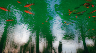 """The photo has won the third price at""""The National Garden during the four seasons of the year""""competition in the spring section. Photo Source: City of Athens"""