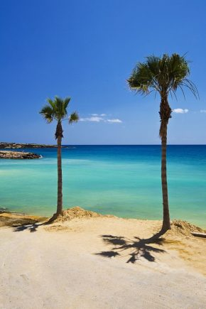 Palm trees on a beach on Cyprus.