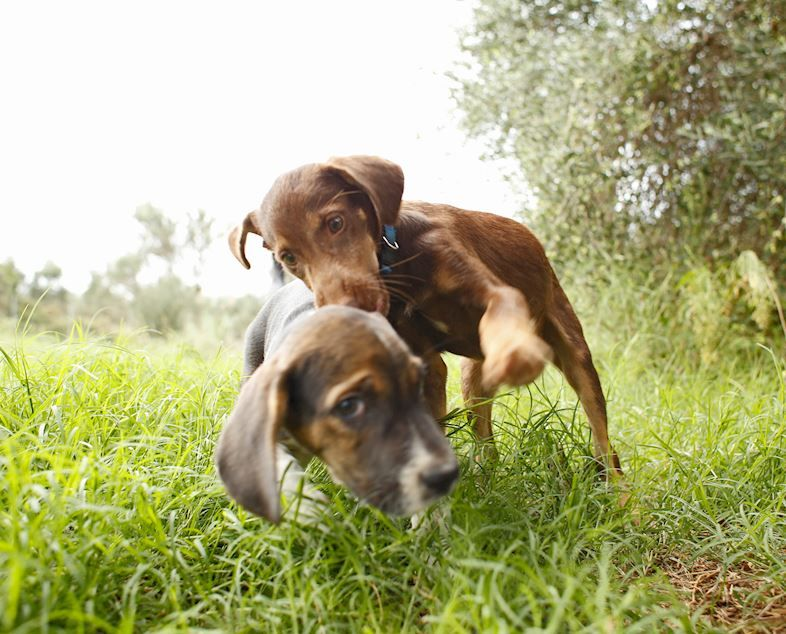 Stray Dog Adoption Event to be Held in Messinia - GTP Headlines
