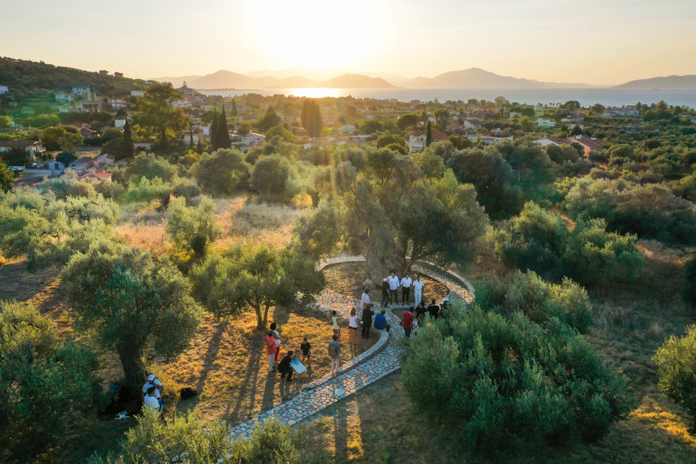 Drone footage from the ancient settlement of Artemision where Mavroelia from Artemision, which is also know as Olive Mavromandila can be found (photo by Dimitris Andritsos Photography @ Αυθεντικός Μαραθώνιος Κολύμβησης)
