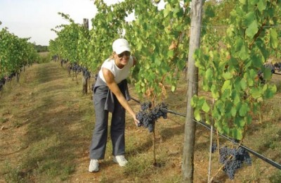 Claudia Papagianni at the first harvest.